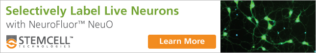 Selectively Label Live Neurons with NeuroFluor™ NeuO. Learn More.