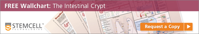 Free wallchart: The Intestinal Crypt