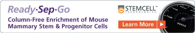 Column-Free Enrichment of Mouse Mammary Stem & Progenitor Cells