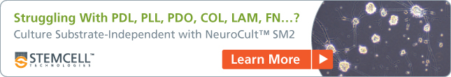 Culture primary neurons independent of substrate with NeuroCult™ SM2