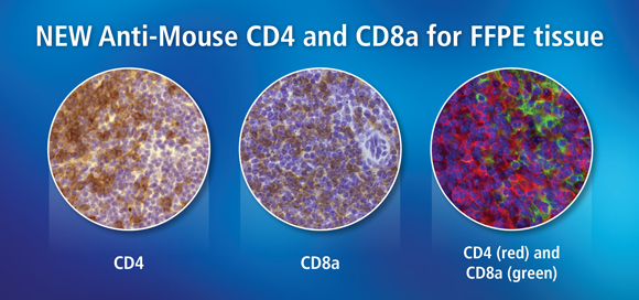 NEW Anti-Mouse CD4 and CD8a for FFPE tissue
