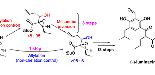 Total Synthesis of (−)-Luminacin D