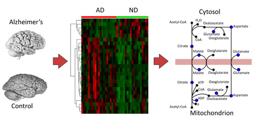 Unbiased Metabolomic Investigation of Alzheimer's Disease Brain Points to Dysregulation of Mitochondrial Aspartate Metabolism
