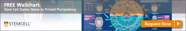 Request your Free Wallchart on Naive and Primed Stem Cell States