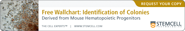 Free Wallchart: Identification Of Colonies Derived From Mouse Hematopoietic Progenitors