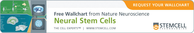 Free Wallchart from Nature Neuroscience: Neural Stem Cells